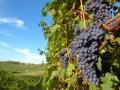 Vino-sfuso-vigna